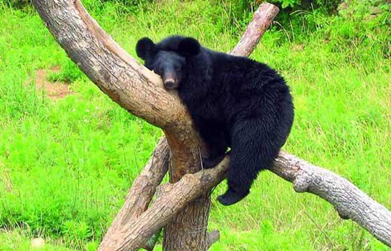 野生动物世界; 青岛野生动物世界1日游;